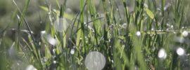 grass orbs